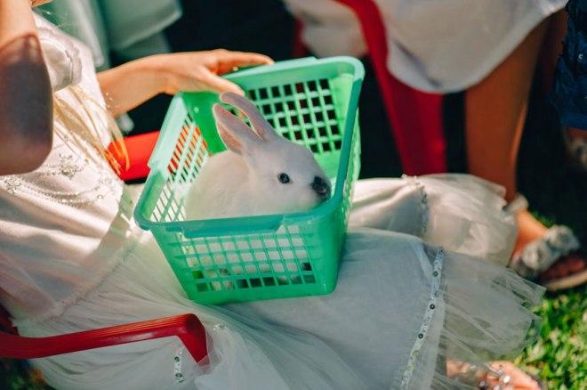 bunny-petting-zoo