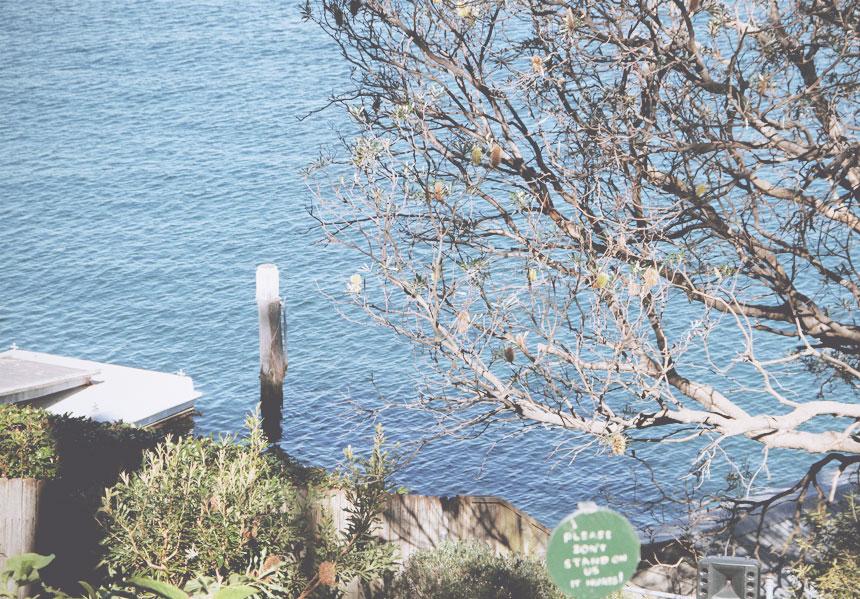 may gibbs view