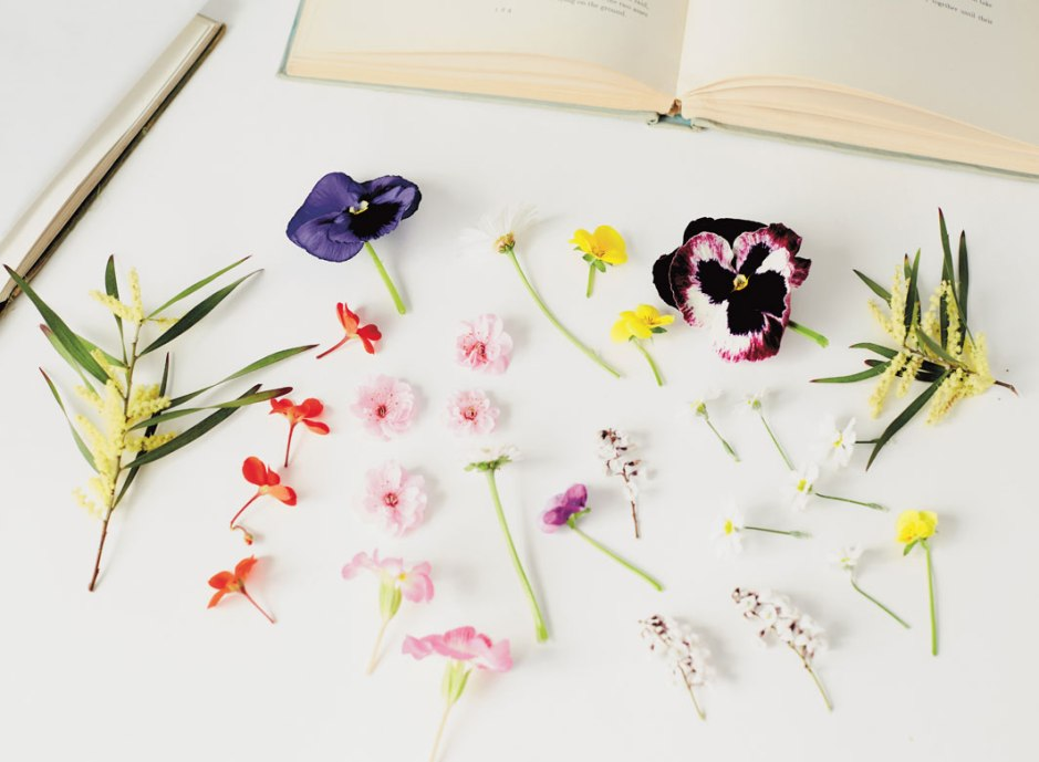 DIY Pressed Flowers on child mags blog